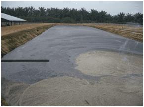 kelapa sawit 1