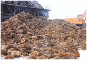 kelapa sawit 2